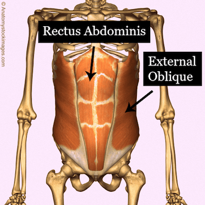Rectus and External